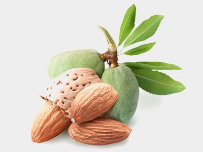 almond nut useful properties