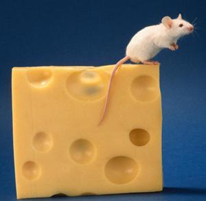 mouse fever prevention