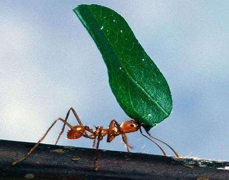 муравьиный спирт состав