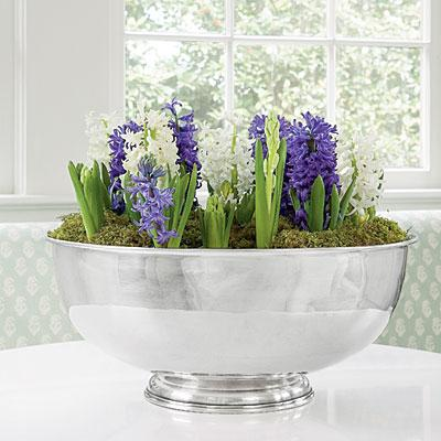 home flowers hyacinth