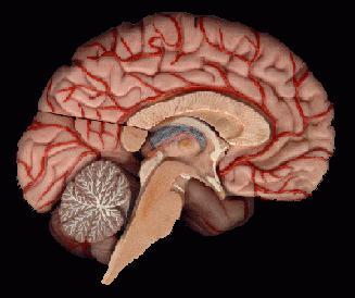 Соотношение категорий «мозг» и «психика»