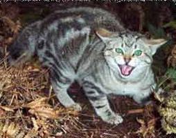 rabies cats symptoms