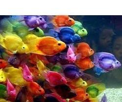 отношения со знаком рыба
