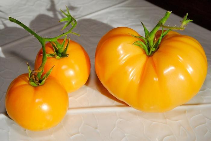 Tomato variety Persimmon