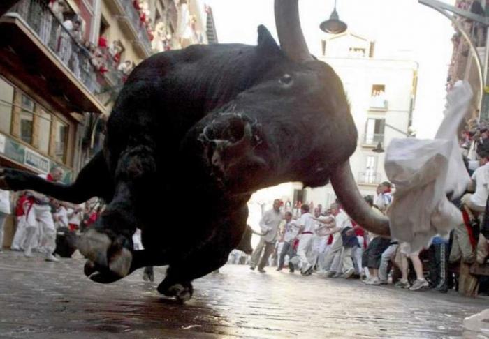 Приснились быки