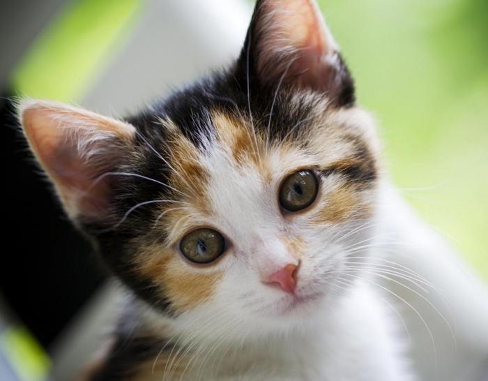 имя кота:
