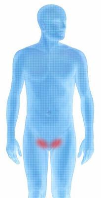 Почему возникает паховая грыжа у мужчин, как она проявляется и чем её лечить