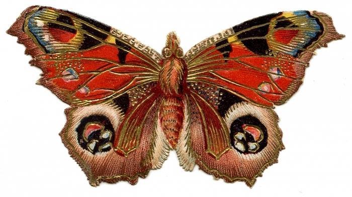 Симметрия в живой и неживой природе