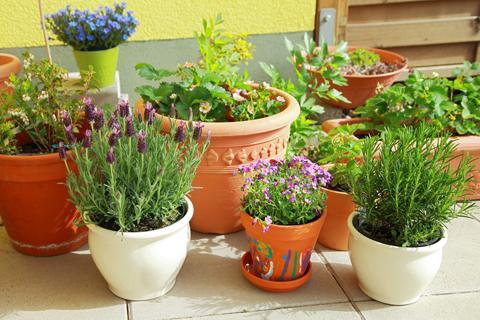Midges on indoor plants