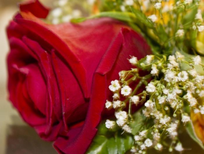 Если во сне вы видите, как поклонники буквально осыпают вас цветами, – в реальной жизни это свидетельствует о том, что ваше душевное одиночество может затянуться.
