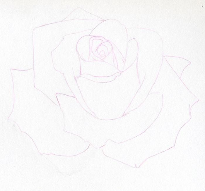 Картинки как поэтапно карандашом нарисовать розу