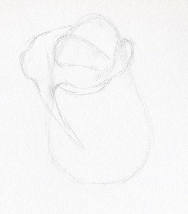 нарисовать розу карандашом