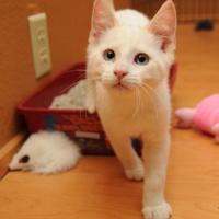 Как отучить гадить кота в квартире