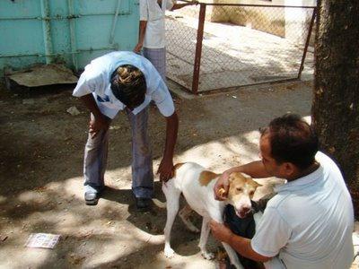 Как сделать прививку собаке самостоятельно фото 613