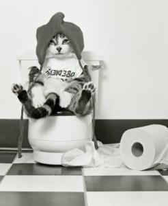 У кошки понос: насколько это опасно?