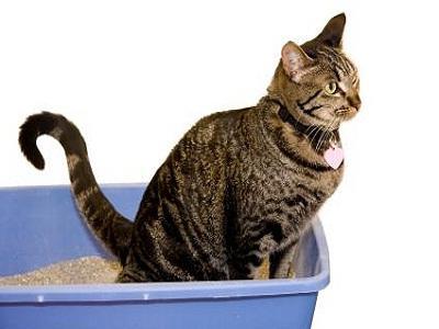 У кошки понос насколько это опасно