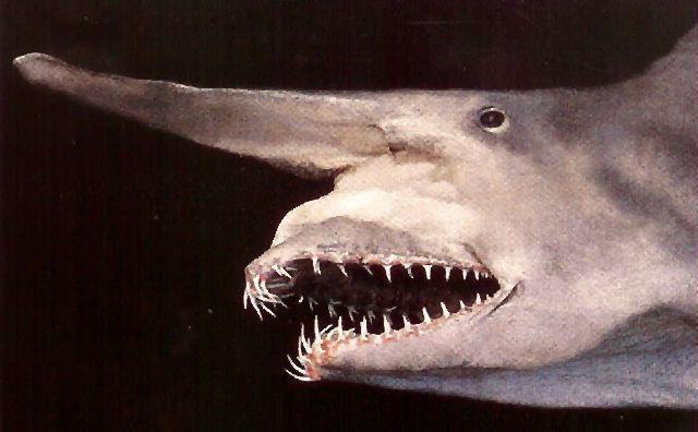 shark goblin