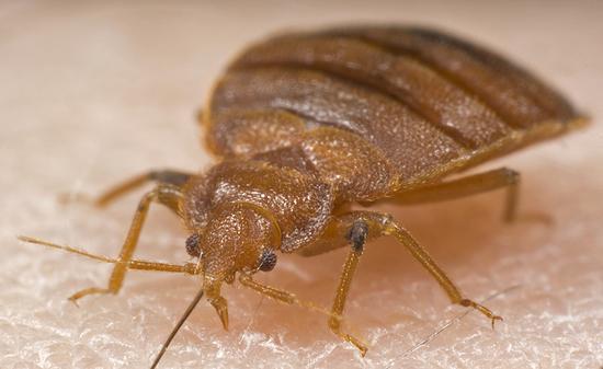Доме и в ванной насекомые что делать