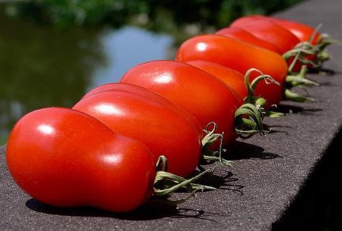 фото петруша огородник томат