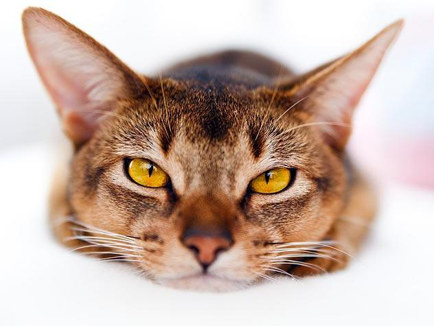 К чему сниться нападение котов