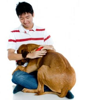 How to wean a dog whine