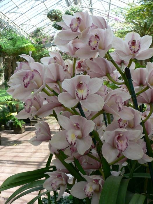 how many blooms the orchid