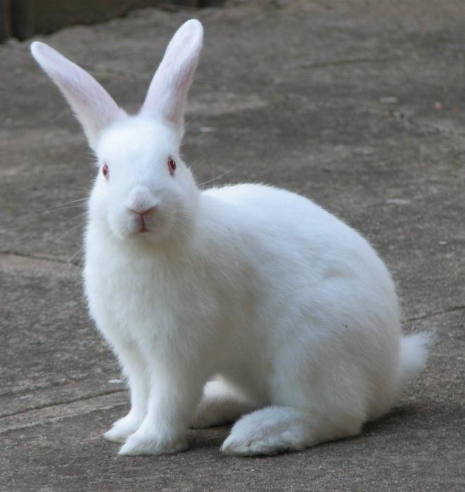кролики к чему снятся