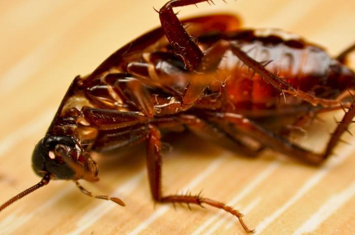 Полный сонник новой эры насекомое — отражение аспектов недостатков и недоработок обращать внимание на характерные особенности насекомого.