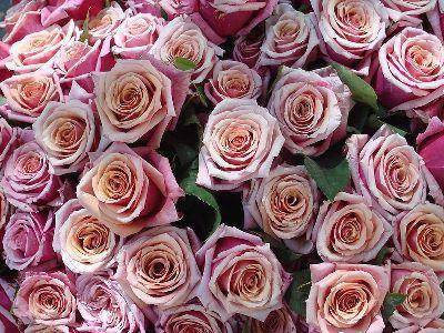 Какие цветы подарить девушке на день