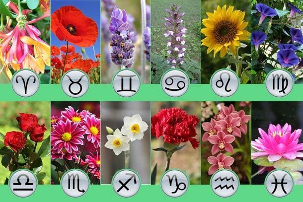 Выбираем цветы по знакам зодиака