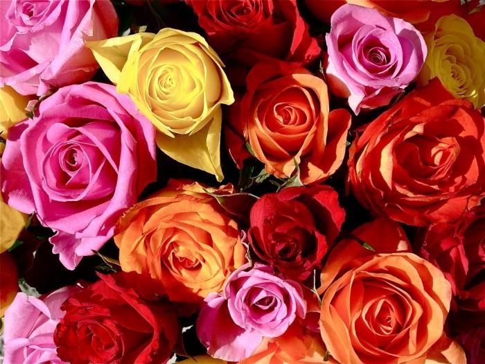 what dreams of roses
