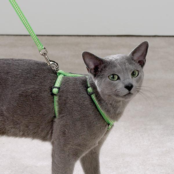 Как сшить ошейник для кошки 16