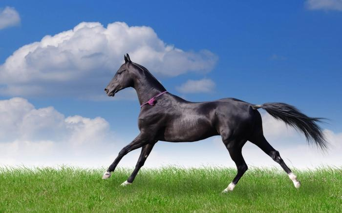 The most beautiful horse in the world photo