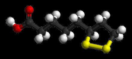 lipoic acid during pregnancy