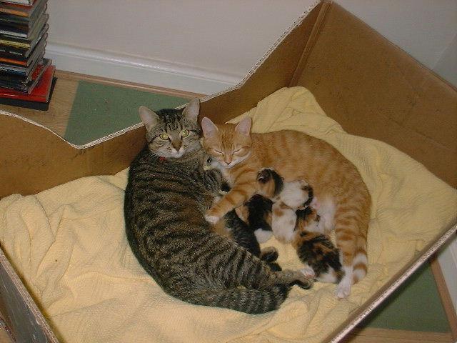 Как принимать роды у кошки в домашних условиях