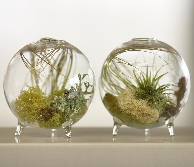 Флорариум из стекла своими руками