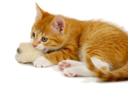 Игрушки для котенка своими руками с фото фото 692