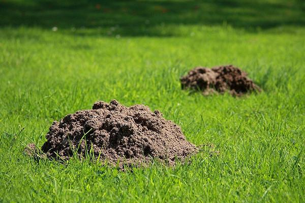 fight against moles in the country