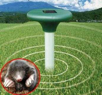 fight against moles on the site