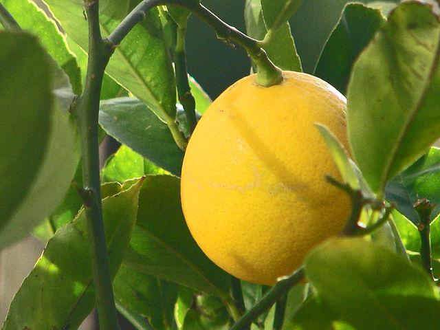 очищение организма лимон мед