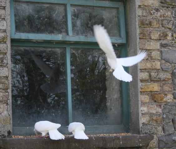 поэтому прилетел голубь застрчл в онжкне и умер парфюма сильно зависит