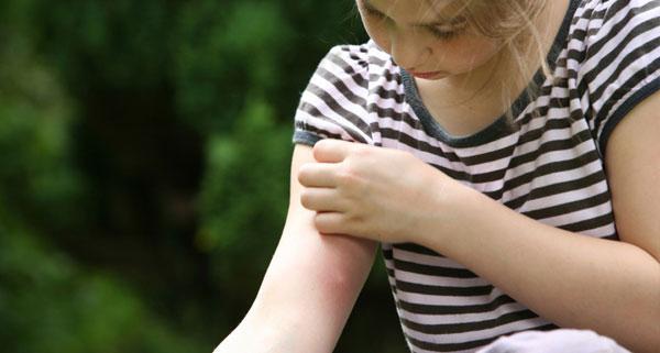 Комары и мошки идут в атаку