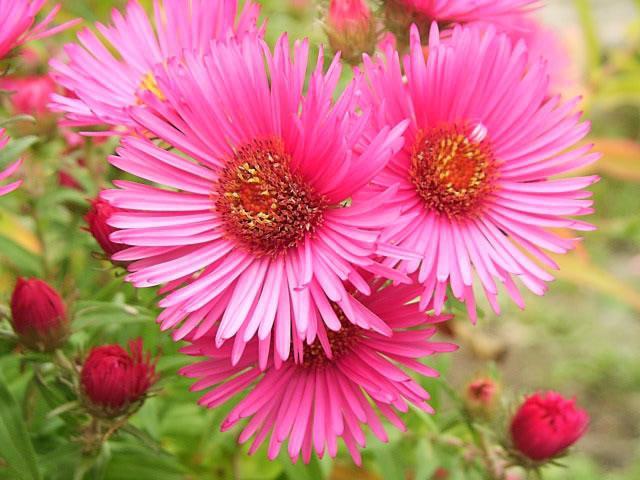 посадка цветов в саду.