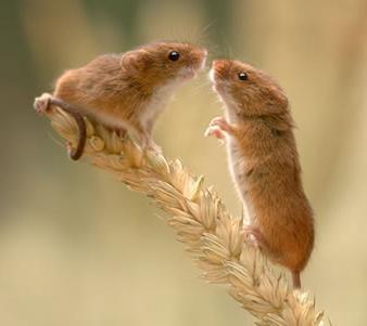 к чему когда тебя снятся мыши: