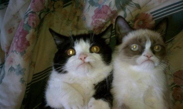 photos of evil cats