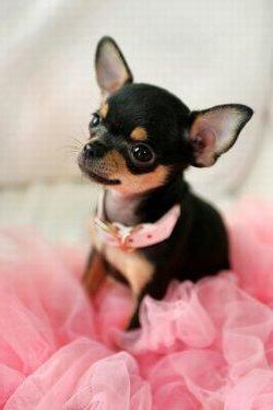 Имена для собаки-девочки и собаки-мальчика