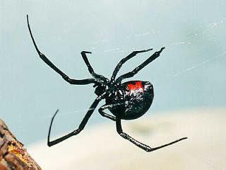 dream interpretation dream interpretation spider