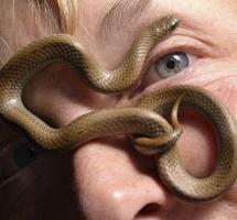 ядовитые змеи на участке