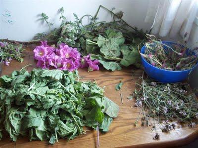 healing properties of clover