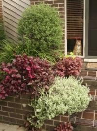 shrubs for garden photo